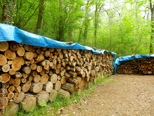 Several piles of acacia and oak logs in a woodland clearing and covered in tarpaulin to keep them dry