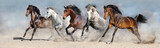 Fototapeta Zwierzęta - Horses run fast in sand against dramatic sky