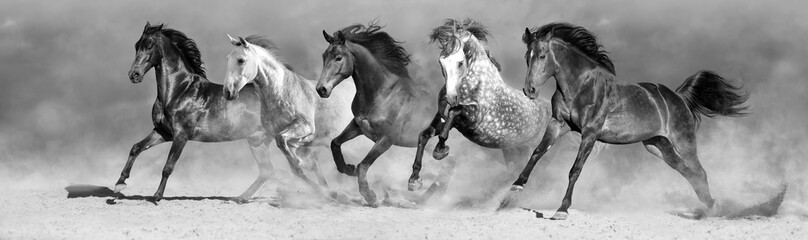 Panel Szklany Koń Horses run fast in sand against dramatic sky. Black and white