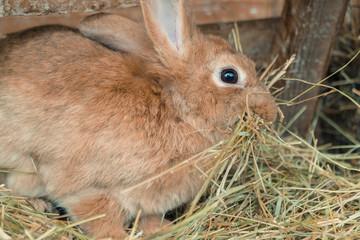 Rabbit. Rabbit eats food