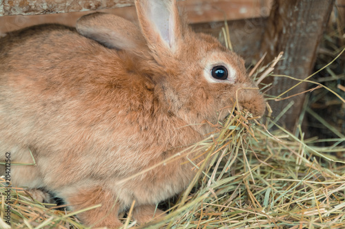 Rabbit. Rabbit eats food