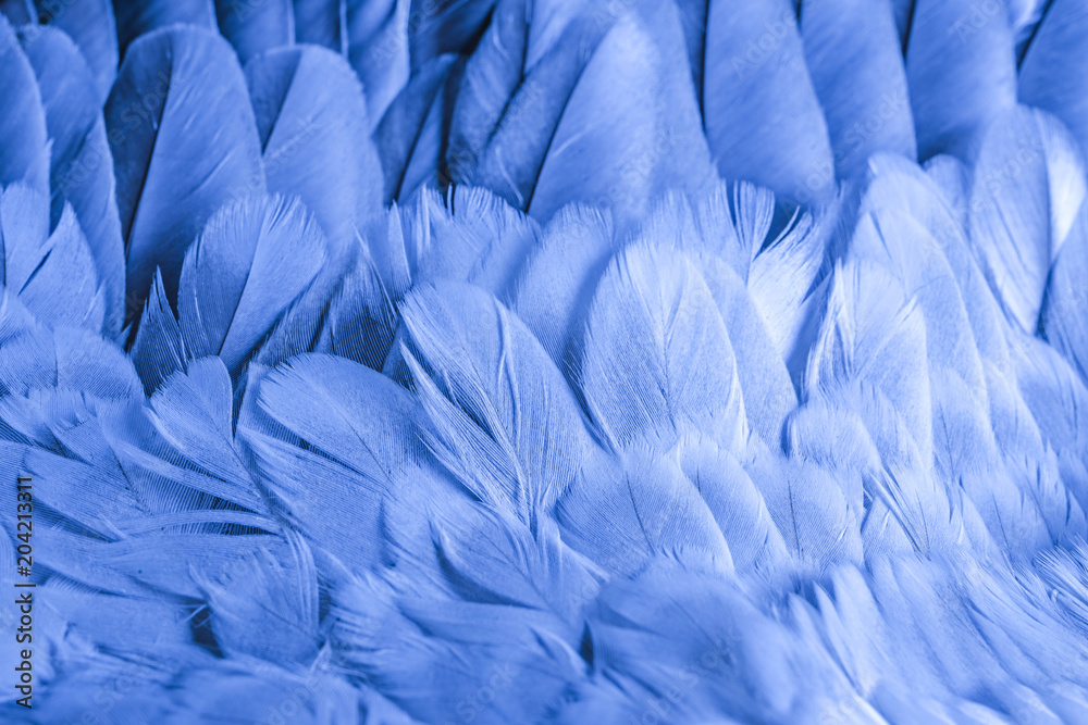 Fototapety, obrazy: a feathers texture closeup in the detail