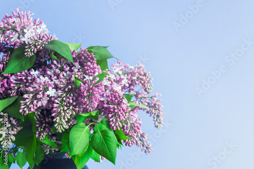 Staande foto Lilac Lilac bouquet on blue background with blank space for text.