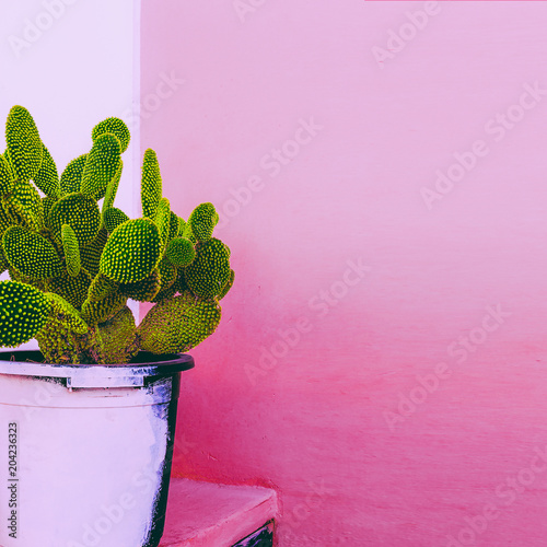 Photo  Cactus. Cactus Garden.  Plants on pink content