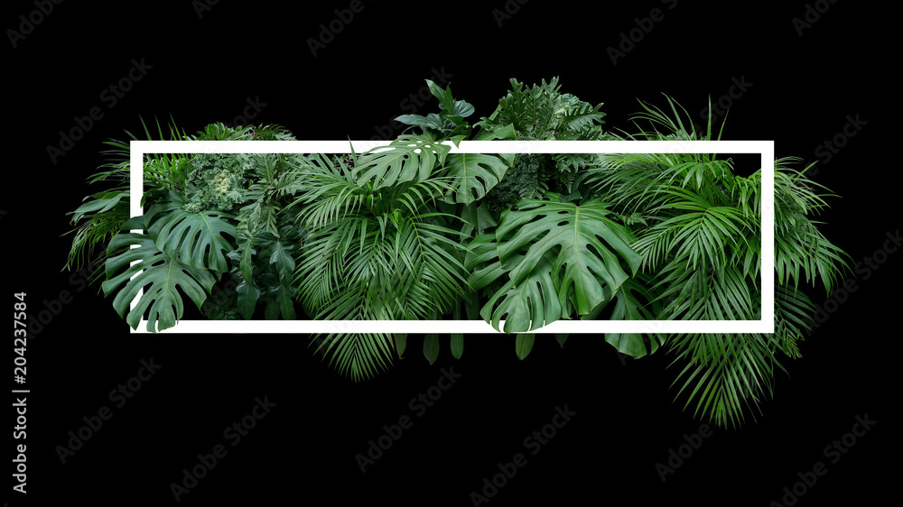 Fototapeta Tropical leaves foliage jungle plant bush nature backdrop with white frame on black background.