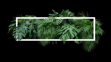 Tropical leaves foliage jungle plant bush nature backdrop with white frame on black background.