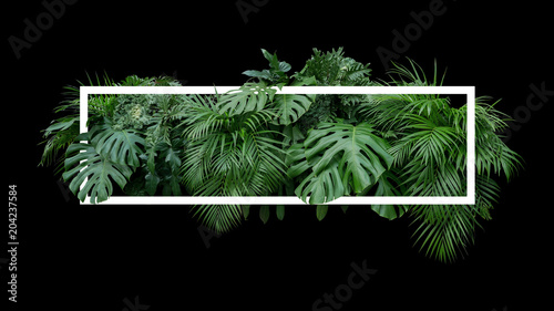 Tropical leaves foliage jungle plant bush nature backdrop with white frame on black background.