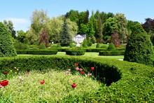 Fioritura Tulipani Arboretum Lubiana