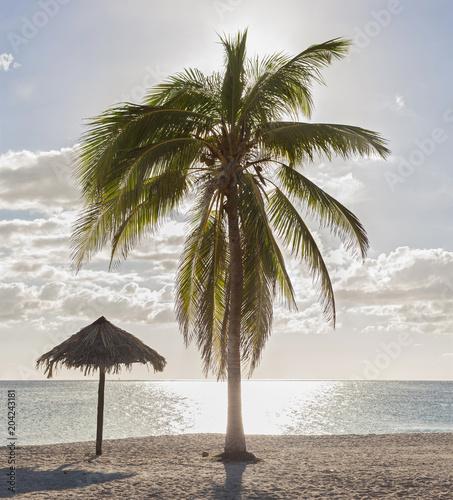 Staande foto Strand Scenic view of Playa Ancon beach and palm tree, Trinidad, Cuba