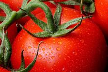 Closeup Of Ripe Tomatoes On Vi...