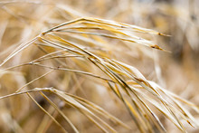 Texture Dry Grass And Surface And Background