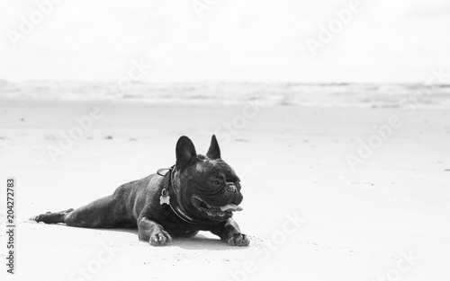 Deurstickers Franse bulldog French Bulldog relaxing