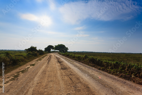 Fotografija  Brazilian dirt road in perspective