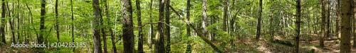 prise de vue panoramique à 360 degrés en forêt