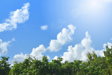 Top Of Green Tree With  Blue Sky And Clouds Background.