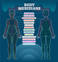 Body Meridian System Vector Il...