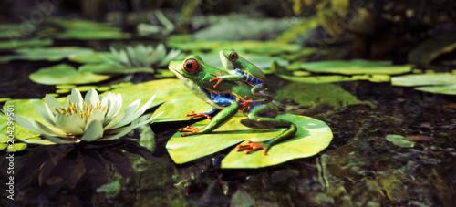 Naklejka premium Rodzina Frog siedzi na liliowej podkładce z dzieckiem na plecach. Przywództwo, ochrona, bezpieczeństwo, koncepcja rodziny. Renderowanie 3d