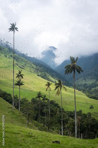 Foto op Canvas Zuid-Amerika land Palmiers dans la vallée de Cocora, Colombie