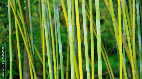 Foto op Plexiglas Bamboe bamboo trees in garden