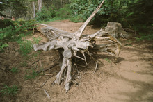 Tree Stump Cut Off In The Forest