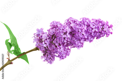 Staande foto Lilac One bunch of purple lilacs on a white background with leaves