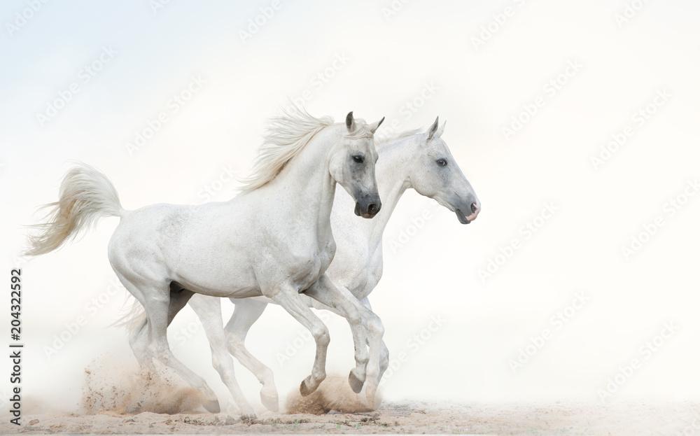 Fototapety, obrazy: Białe ogiery biegnące galopem