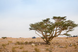 Trees in the desert in a day