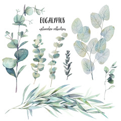 Watercolor various eucalyptus branches set. Hand painted floral clip art: objects isolated on white background.
