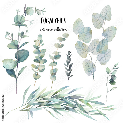 Watercolor various eucalyptus branches set. Hand painted floral clip art: objects isolated on white background. Fototapete