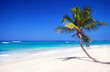 Tropical pristine beach with coconut palm