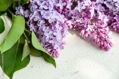 Foto op Canvas Lilac lila Flieder als weicher Blumenhintergrund