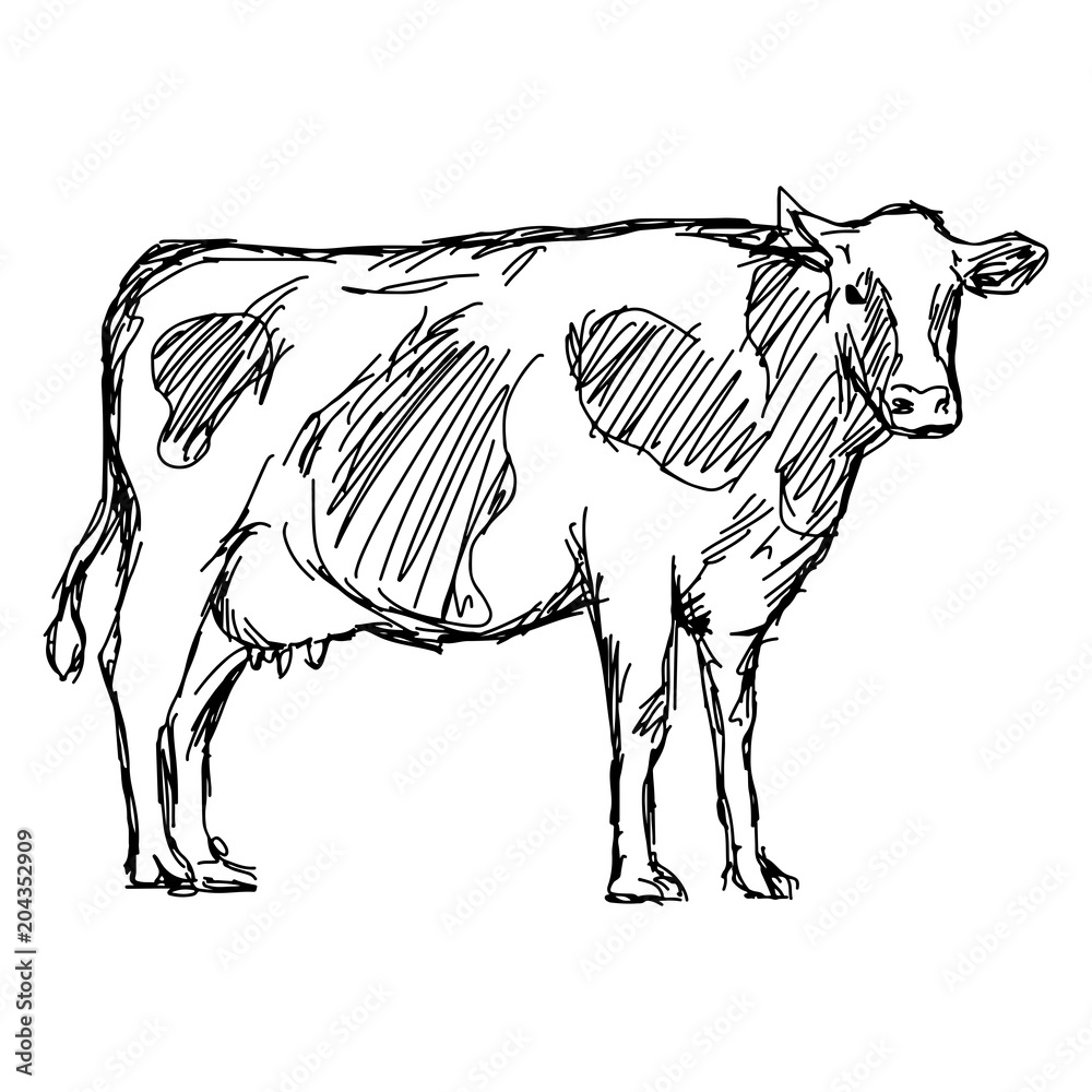 Fototapeta cow vector illustration sketch doodle hand drawn with black lines isolated on white background