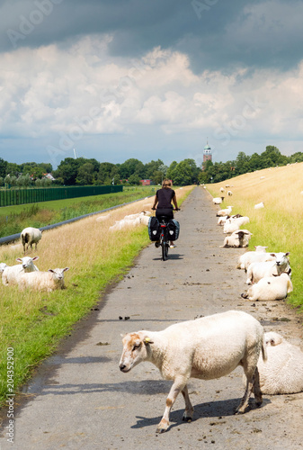 Poster Fietsen Radeln zwischen Schafen am Deich entlang durch Ostfriesland, Deutschland