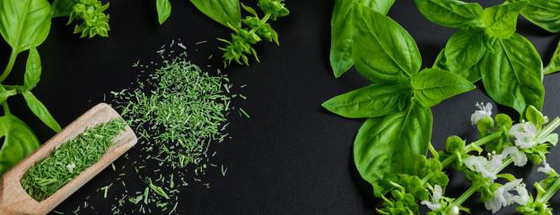 Fototapeta Przyprawy Fresh basil on a dark background. Green basil. Green basil on a dark background. Food background. A lot of basil.Long banner