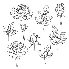vector contour  rose flowers coloring book hand drawn  pattern
