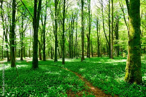 Spoed Foto op Canvas Forest Flower