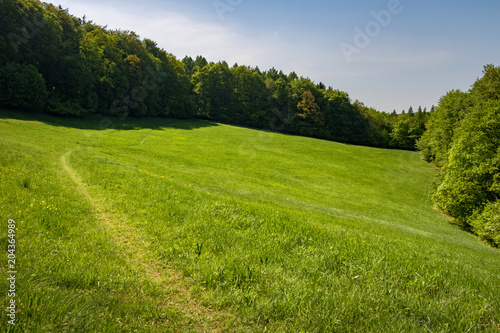 Foto op Canvas Pistache Spring or summer landscape - green meadow and forest