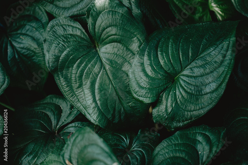 Fotoposter Planten Closeup of green tropical plants