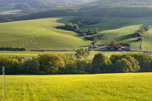 Foto op Canvas Pistache Morning spring landscape with green pastures, village and cows