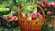 Closeup basket and boxes with apples harvest in the garden