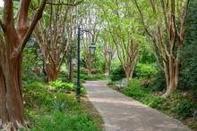 Empty Path Through The Trees I...