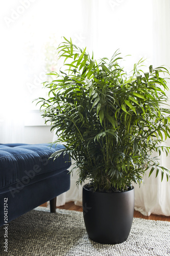 Deurstickers Planten plant