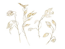 Lunaria Branches Set.  Waterco...