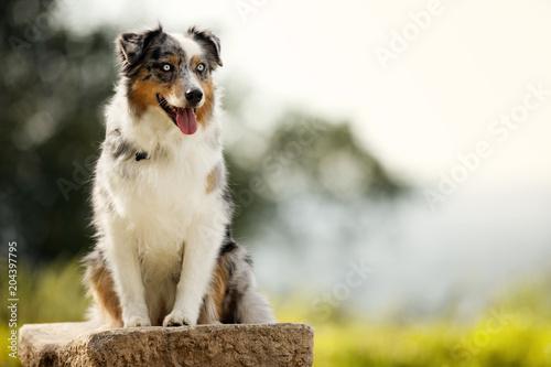 Happy dog sitting on a rock.