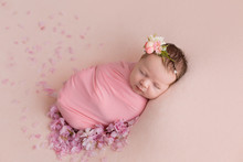 Newborn Girl. Newborn Photo Sh...