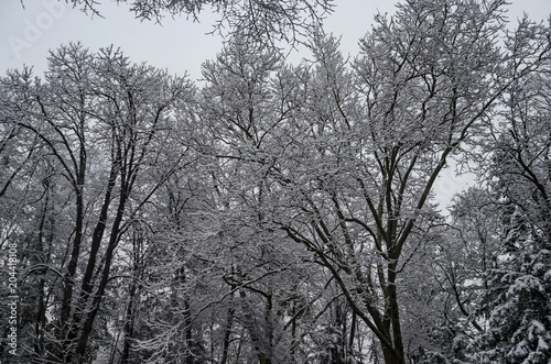 Foto op Aluminium Grijs Snowy trees in winter late afternoon, Bankia Sofia