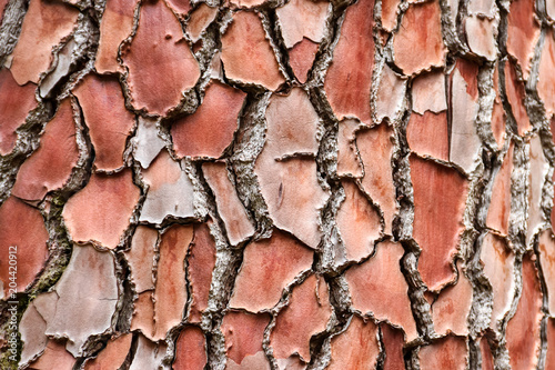 Papiers peints Orange eclat Texture of the pine bark for background