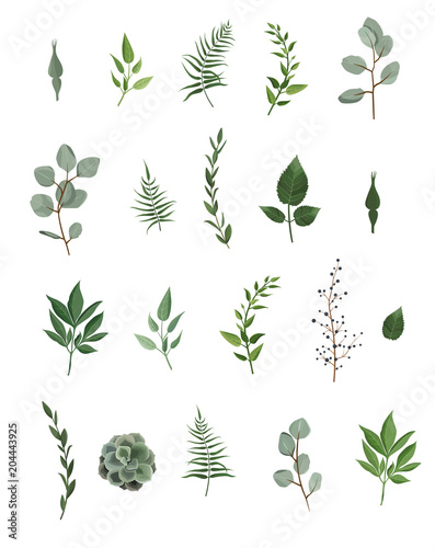 Fotografía  Vector designer elements set collection of green eucalyptus, art foliage natural leaves herbs in watercolor style