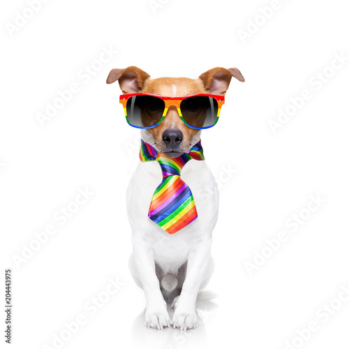 Foto op Canvas Crazy dog gay pride dog