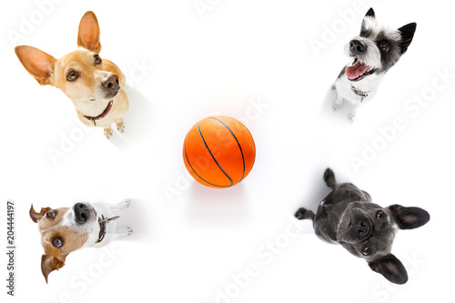 Foto op Canvas Crazy dog basketball and group of dogs